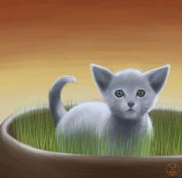 Blue kitty by FiliDwarf