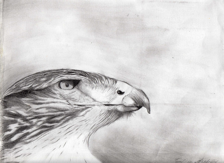 Hawk -pencil- by kedaousadamaa