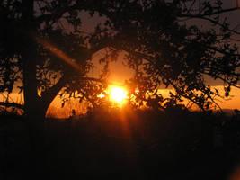 Sunset Through Leaves