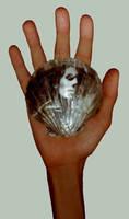 shelloid