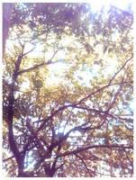 Sunny Afternoon by poisondanny
