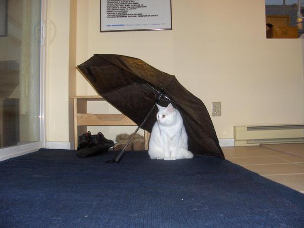 kitten+umbrella:2