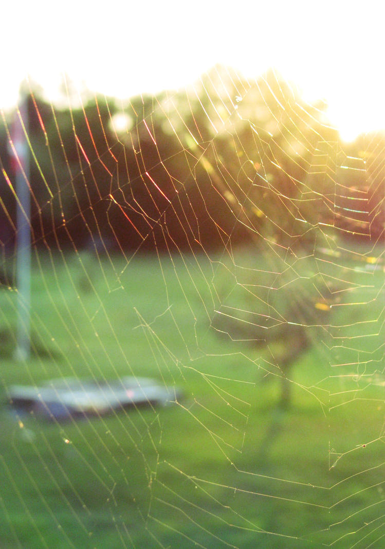 Web of light by phoenixspark on deviantart - Add spark wall art picture lights ...
