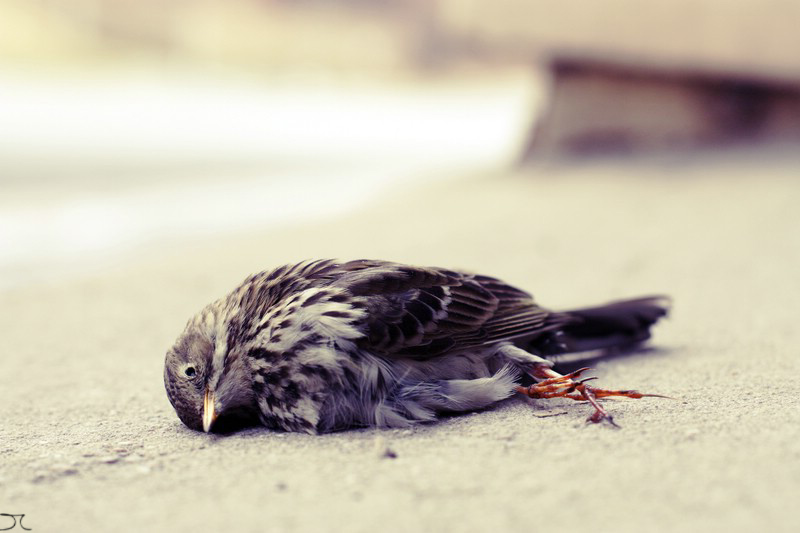 dead bird... by kaputtgemenscht