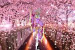 CE: Miss Magix 2015 - Sakura no hana no utsukushi