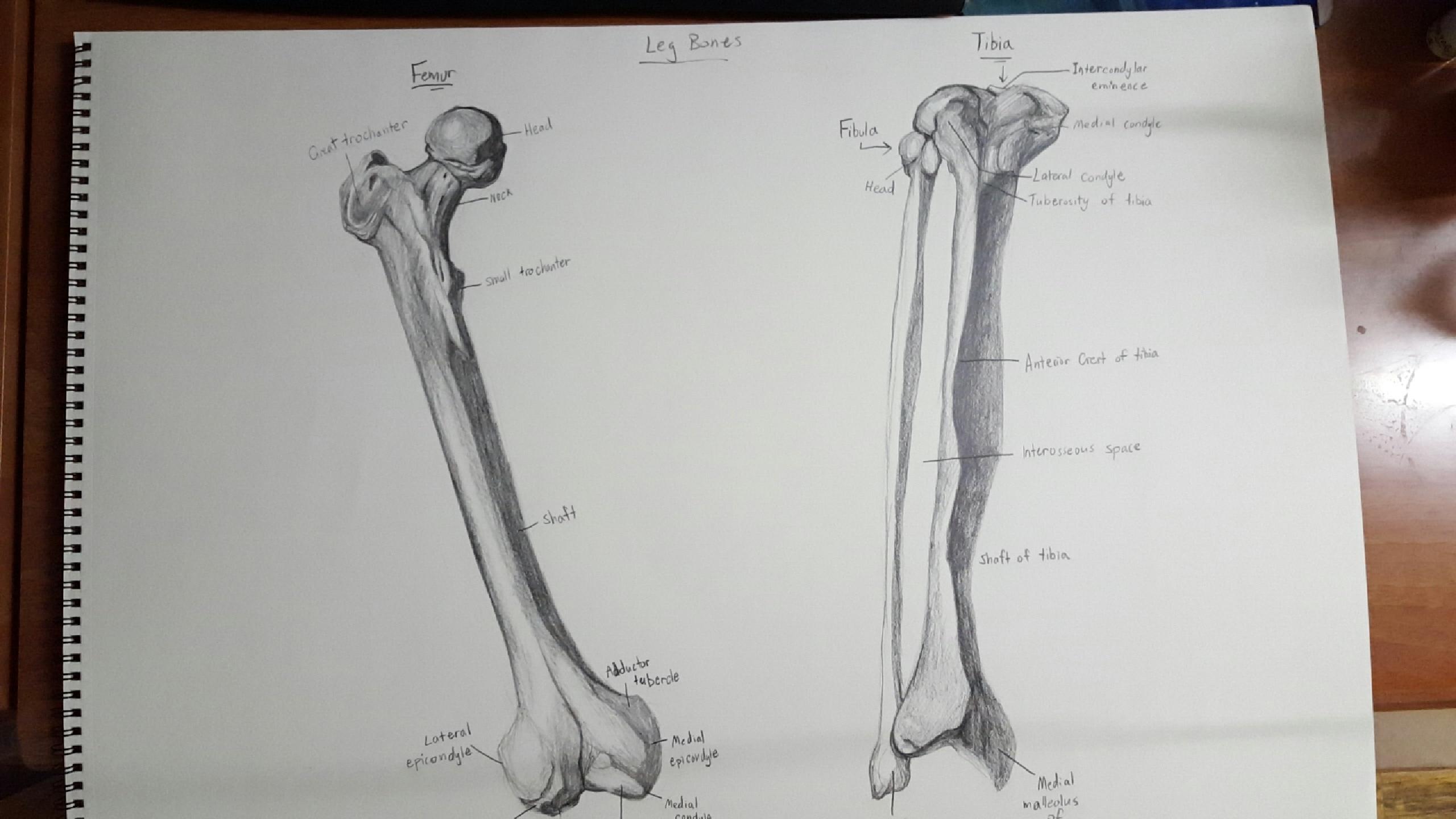 Human anatomy homework help Top Rated Tutors