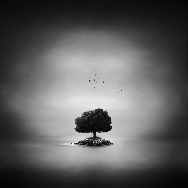 tree island by windrides