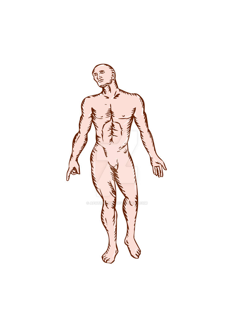 Gross Anatomy Male Standing Woodcut by apatrimonio