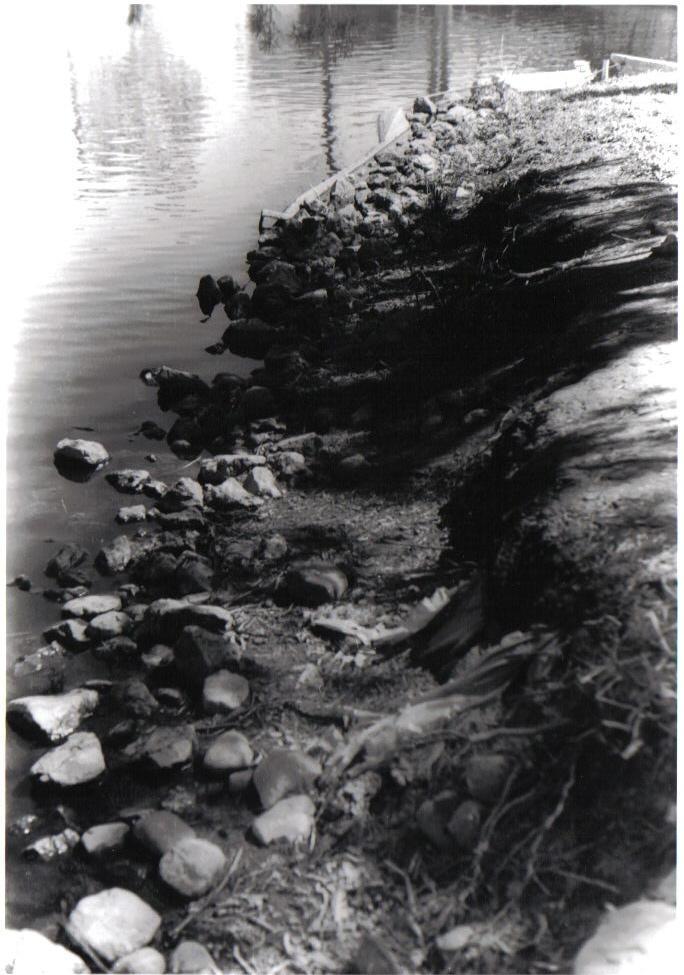 duck pond by ace24dbz