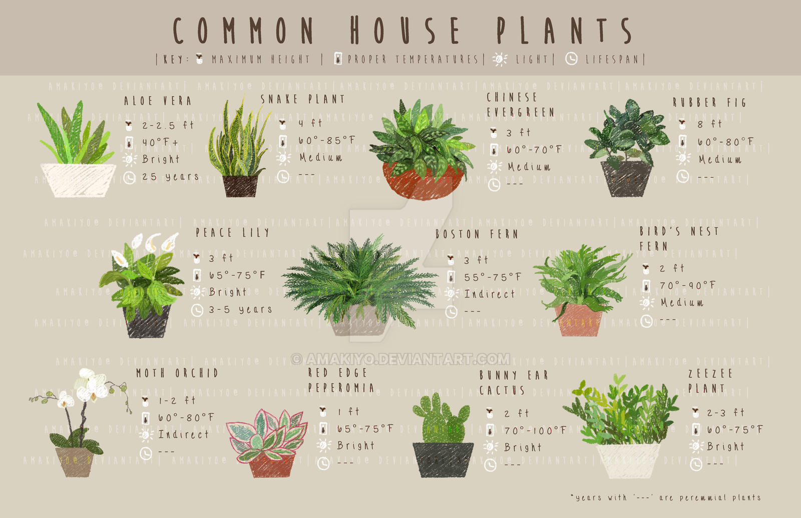 Common house plants by amakiyo on deviantart - Most popular house plants ...
