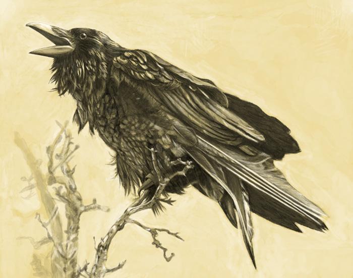 Raven by kazenokibou