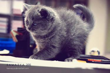 Kitty by kamazya