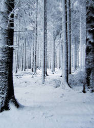 Snow Background by PVS