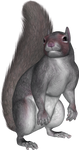 Sitting Squirrel PNG by PVS