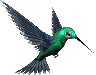 Green Humming Bird PNG by pixievamp-stock