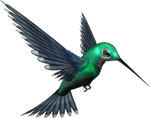 Green Humming Bird PNG