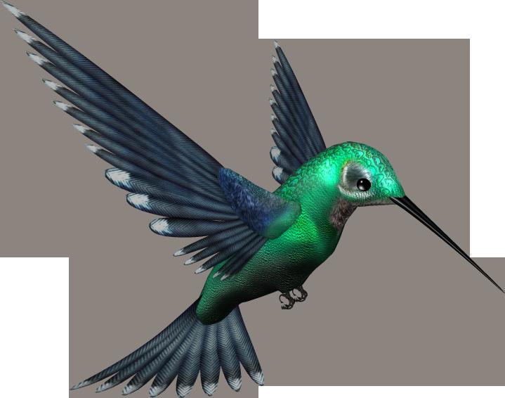 Green Humming Bird PNG