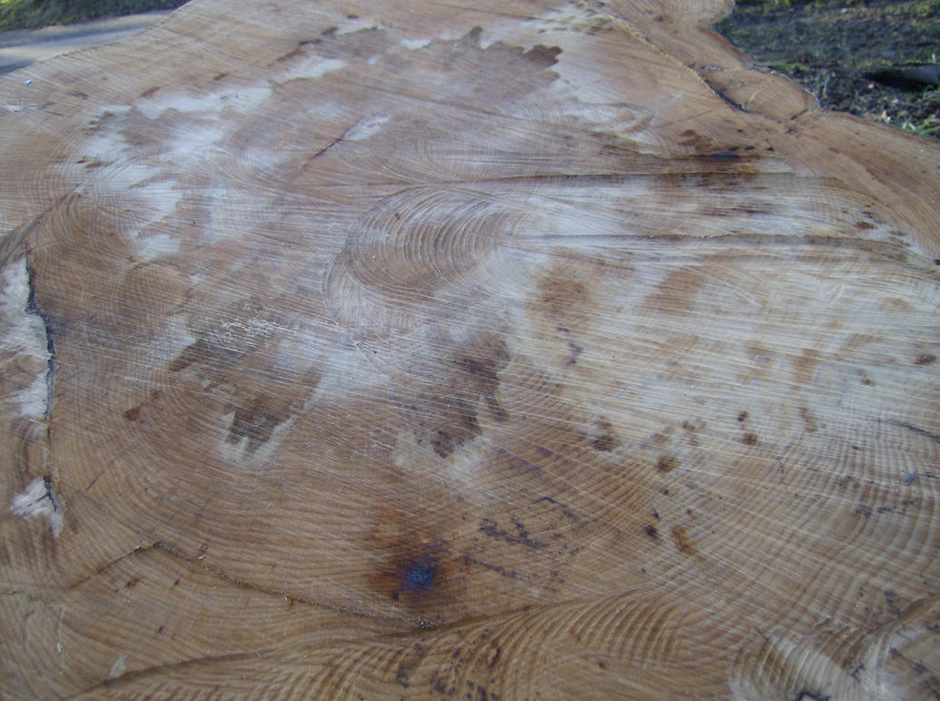 Tree-Stump-Stock-PVS by pixievamp-stock