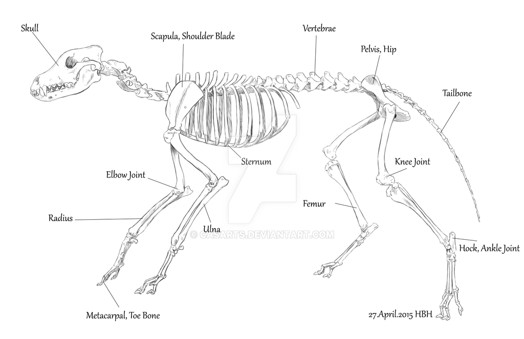 Wolf Skeleton With Names By Casarts On Deviantart