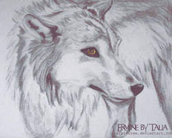 Charcoal Wolf