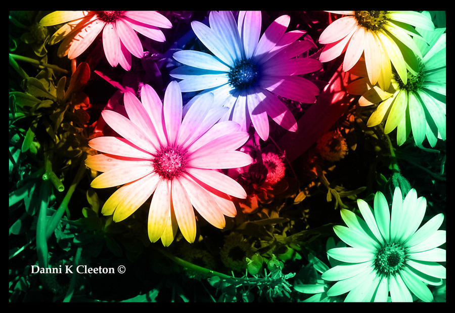 Colourful Flowers by Random101Girl