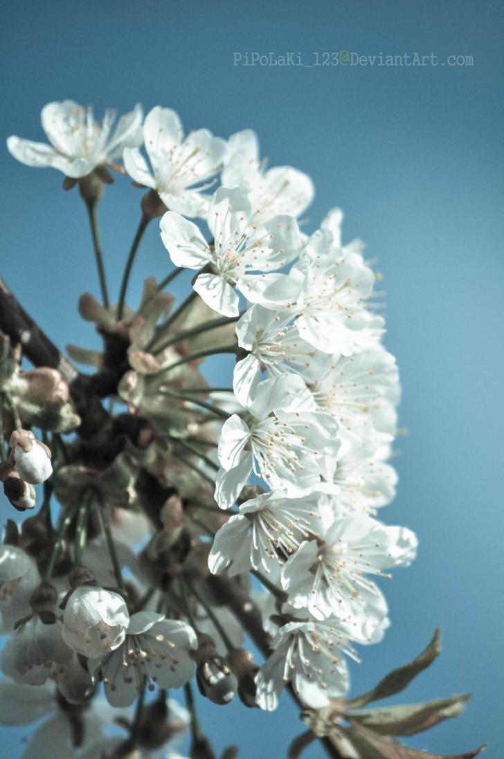 Acid blossom by pipolaki123