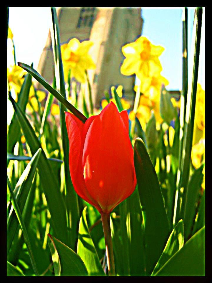 Devine Spring by LadyAcceber