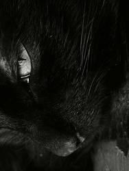 Black Cat by bezag