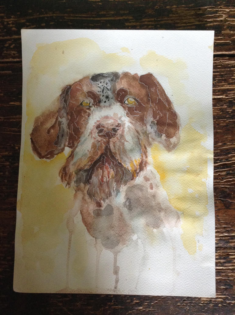 German wirehaired pointer watercolor by bezag