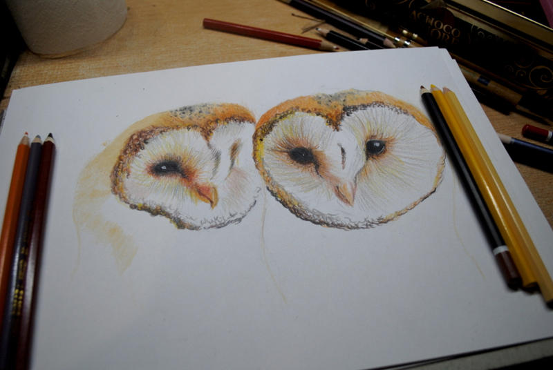 Drawing barn owl colored. by bezag