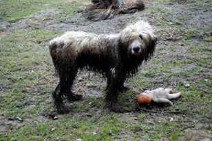 muddy adventure by bezag