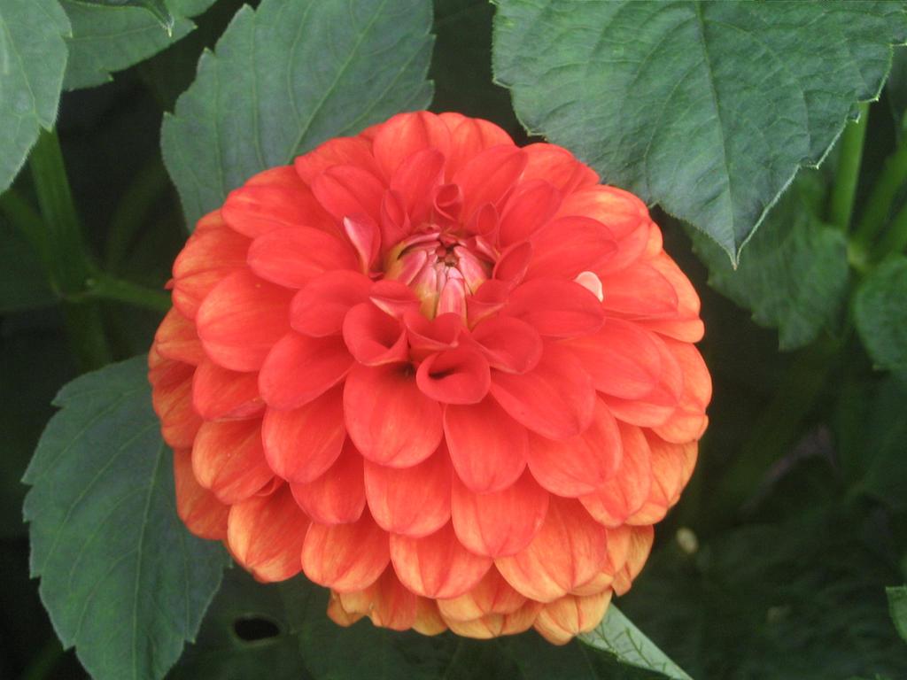 Vermillion Flower Bloom by Nethilia on DeviantArt
