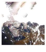 shoe polaroid