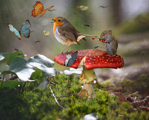 Singing for the butterflies