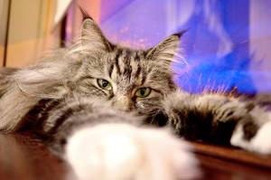 Sleepy kitty by Aishlling