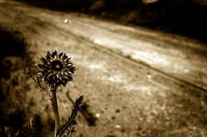 Spiney Flower by Philzang