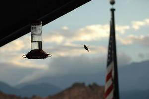 Humming Bird against mountains by Philzang