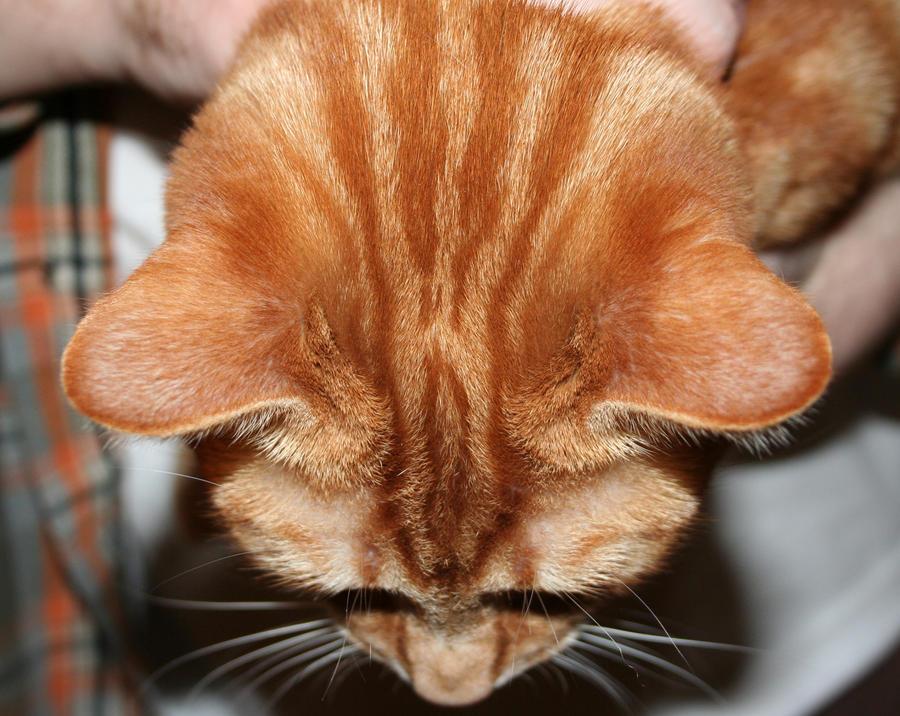 Cat Ear - top view by Slaskia
