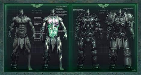 W40K Astartes Anatomy