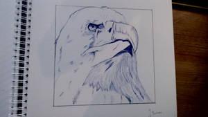 Eagle pen drawing