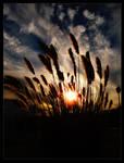Shiny Blades Of Grass