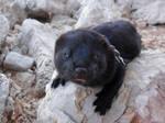 My mink on a rock