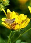 Moth macro by djRimzi
