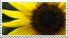 STAMP: Proud Yellow 2 by djRimzi