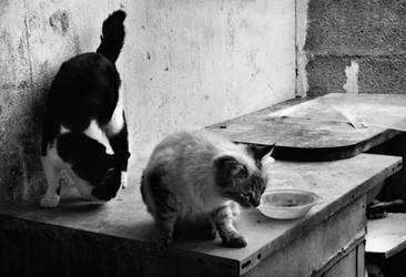 Cats by LacrymosaStudio