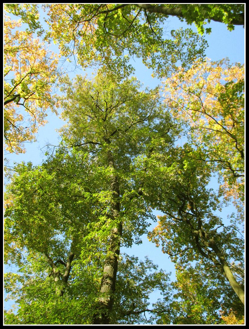 Autumn 1 by batjenka
