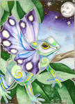 Butterfly Frog1