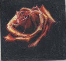 rose by Bamboozles