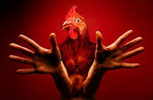 the cocker by vidi