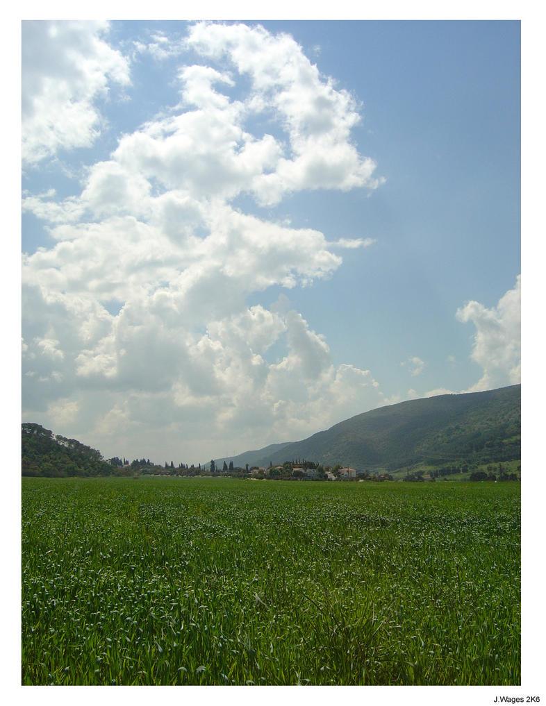 Fields in Israel by Bensaret